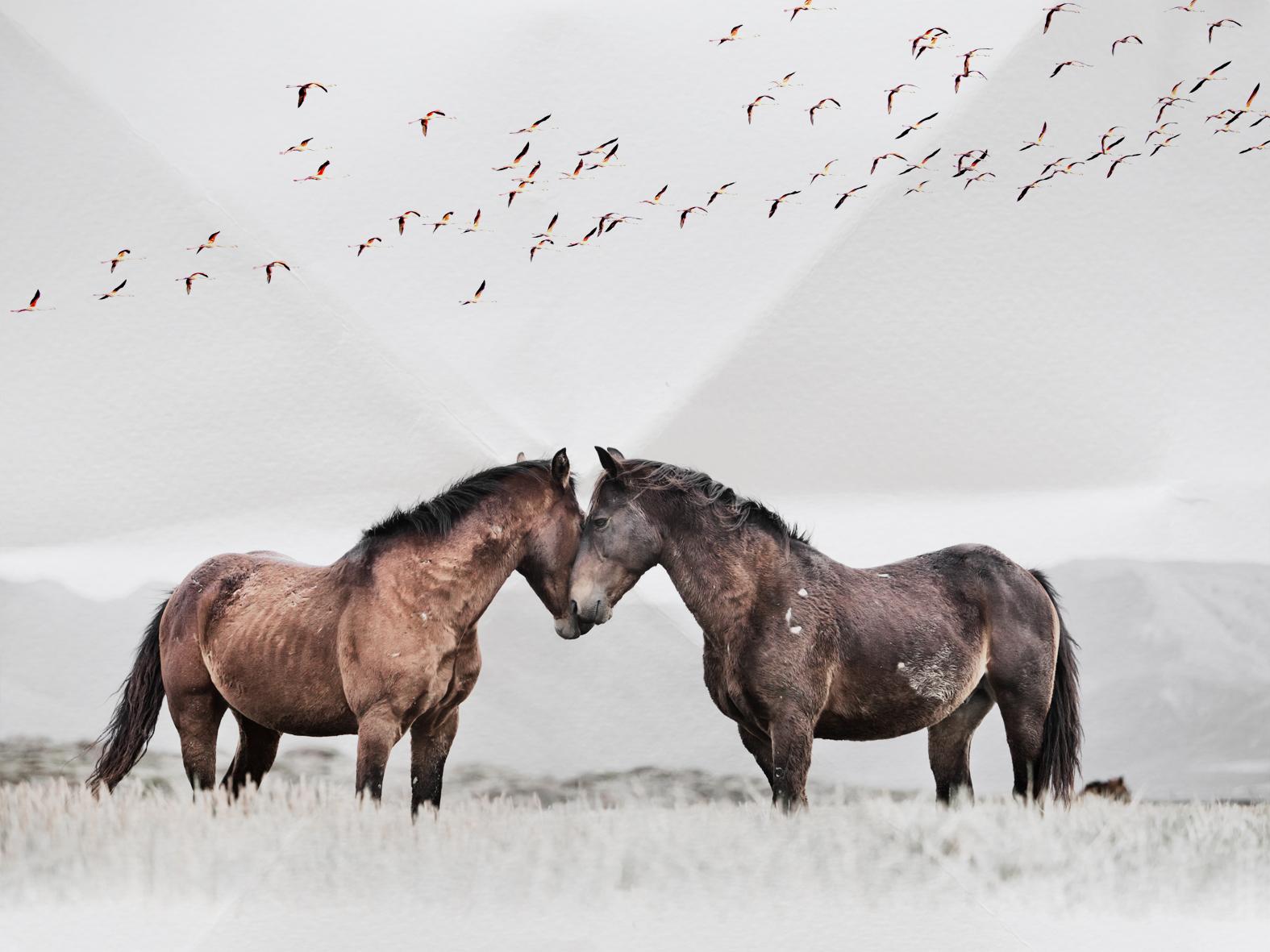 HORSES8-4-3-crop-small