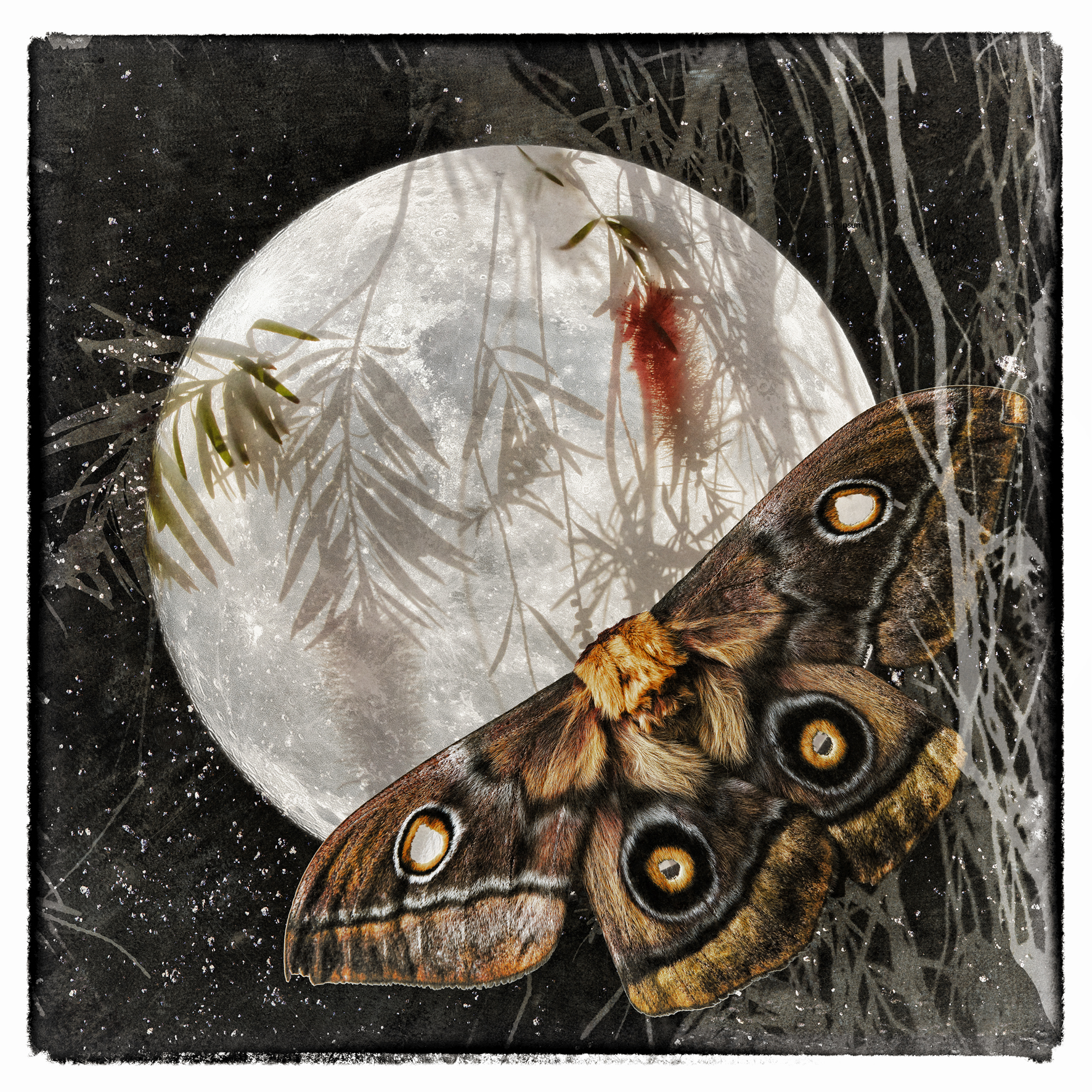 moth and the moon-Recovered-Recovered-new-small